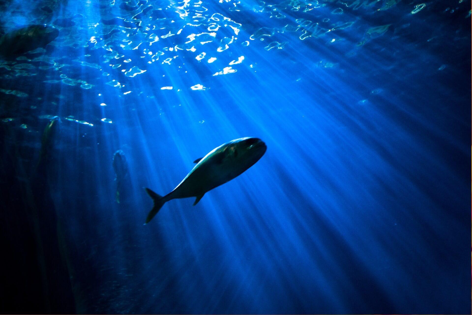魚の目のイメージです。